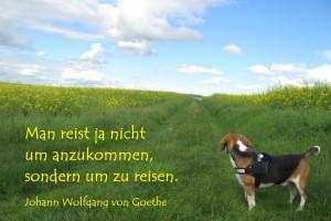 Kurse für Rückenyoga. Zitat: Man reist ja nicht um anzukommen, sondern um zu reisen. J.W.Goethe