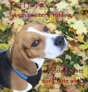 2013 11 01 Kato der Yogahund im Herbstlaub