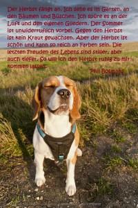 2013 Herbstbeginn mit Kato der Yogahund