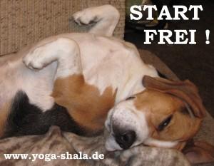 2015 01 09 Kurs-Start im Yoga-Shala Erfurt mit KATO der Yogahund