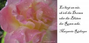 2015 01 20 Dornen oder Blüten der Rose sehen MR