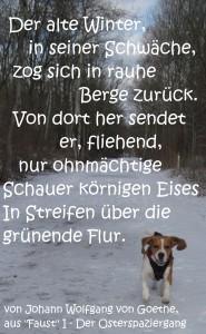 2015 03 02 letzter Schneespaziergang um Erfurt mit Kato der Yogahund