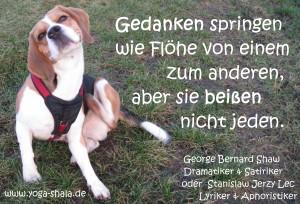 2015 04 04 Flöhe und Gedanken im Yoga-Shala Erfurt