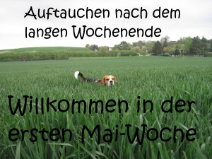 2015 05 04 erste Mai-Woche im Yoga-Shala Erfurt