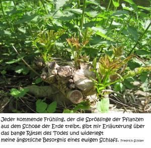 2015 05 14 Frühlingsfragen im Yoga-Shala Erfurt